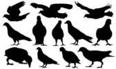 Tauben — Stockvektor