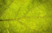 Leaf close up — Stock Photo