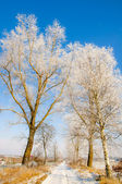 Winter scenery, trees covered by snow — Stock Photo