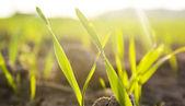 Una imagen de planta — Foto de Stock