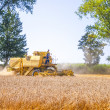 Combine harvesting corn — Stock Photo #17848237
