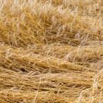 Wheat beaten down — Stock Photo #17850643