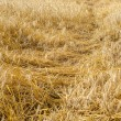 Stock Photo: Wheat beaten down