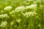 Meadow — Stock Photo