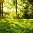 Forest in the morning with sunrays - Stock Photo