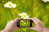 Mobile phone photography — Stock Photo
