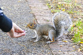 Feed a squirel — Stock Photo