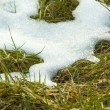 Stock Photo: Melting snow on meadow