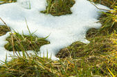 Melting snow on the meadow — Stockfoto