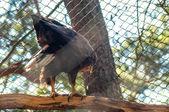 Орел на дереве — Стоковое фото