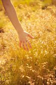 Woman's hand touching the blades of grass at sunset — Stock Photo