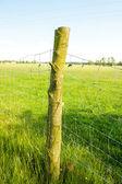 Elektrický plot na louce — Stock fotografie