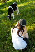 Calves in the meadow race hf — Stock Photo