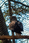 Eagle on a tree — Stock Photo