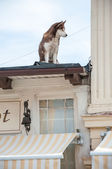Dog on the roof watching the passers-restaurant — Stok fotoğraf