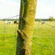 Electric fence on the meadow — Stock Photo