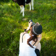 Woman making photos of calves in the meadow — Stock Photo