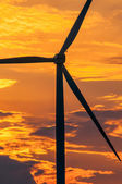 Wind turbines at sunset — Stock Photo