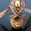 Died hornet — Stock Photo #31817139