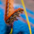 Low angle view of catepillar worm — Stock Photo