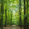 Stock Photo: Forest pathway
