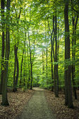 Forest pathway — Stock Photo