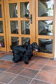 狗站在房子的门面前 — 图库照片