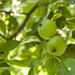 Ripened green apple — Stock Photo