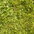 Grass surface — 图库照片