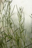 Grass surface — Stock Photo