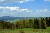 Carpathian mountains at spring — Stock Photo