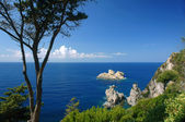 Tree and cliff on coast at Corfu island — 图库照片