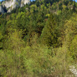 White rock and forest at spring in Pieniny — Stock Photo