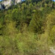 Stock Photo: White rock and forest at spring in Pieniny