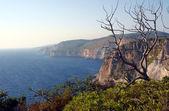 Dry tree on cliff, Zakynthos island — Stock Photo