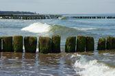 Houten golfbreker baltische zee — Stockfoto