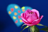 Rose and heart on Valentine's Day — Stock Photo