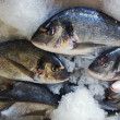 Fishes in fishmonger — Stock Photo