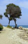 árbol solitario en la orilla del mar — Foto de Stock