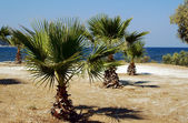 Havets kust med palm tree — Stockfoto