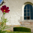 Red flower and the window of a medieval church — Stock Photo