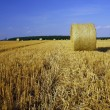 Stubble after harvest — Stock Photo