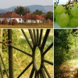 Постер, плакат: Collage of rural pictures