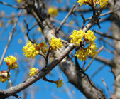 Beautiful yellow spring flowers — Stock Photo