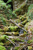 Small stream in the forest — Stock Photo
