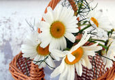 Bunch of daisies in a basket — Stock Photo