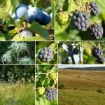 Beautiful collage of autumn fruits — Stock Photo #6400596