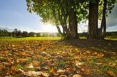 Sunny fall lawn — Stock Photo