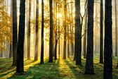 Kouzelný les — Stock fotografie