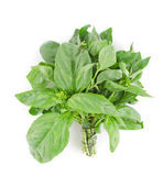 Bunch of basil — Stock Photo